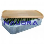 Corcyra Egg Cleaning Device Laboratory Equipments Supplies